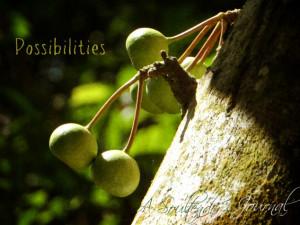 possibilities2