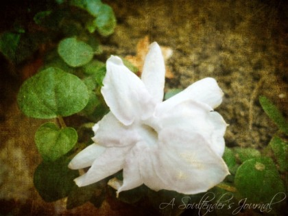 textured-sampaguita5